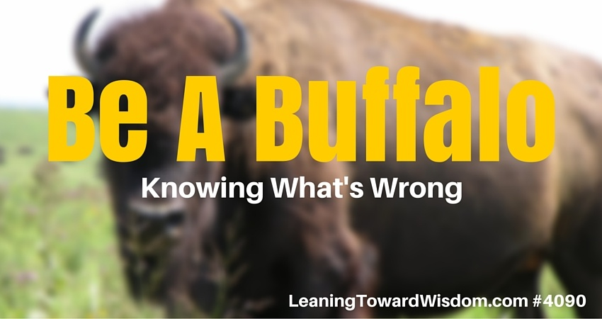 Be A Buffalo (Know What's Wrong) #4090 - LEANING TOWARD WISDOM with Randy Cantrell